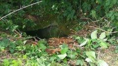Ostrów Mazowiecka - Pies wpadł do piwnicy ziemnej znajdującej się na o