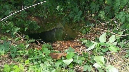 Ostrów Mazowiecka - Pies wpadł do piwnicy ziemnej znajdującej się na opuszczonej
