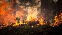 Ostrów Mazowiecka - Około hektara lasu spłonęło dziś w gminie Małkinia Górna. Po