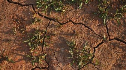Ostrów Mazowiecka - W związku z wystąpieniem szkód w uprawach rolnych wyrządzony