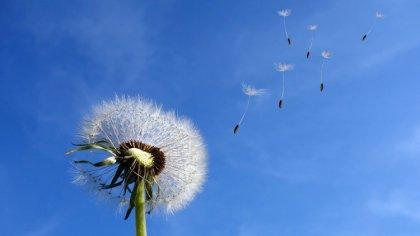 Ostrów Mazowiecka - Wiosna jest najbardziej uciążliwą porą roku dla alergików. T