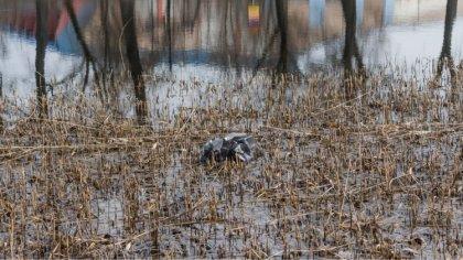 Ostrów Mazowiecka - Skrzynka skarg, pytań, pochwał i pomysłów:Będąc na spacerze