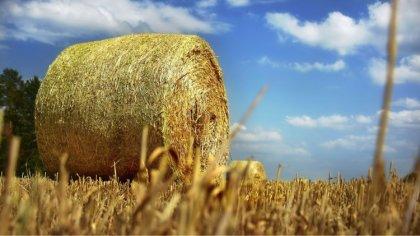 Ostrów Mazowiecka - Rolnicy prowadzący małe gospodarstwa również w tym roku będą