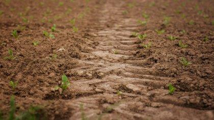 Ostrów Mazowiecka - Skutki suszy dotykają rolników w całej Polsce. Aby zabezpiec
