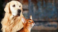 Ostrów Mazowiecka - Analiza tysięcy próbek pobranych od psów i kotów n
