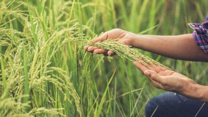 Ostrów Mazowiecka - Od środy 3 czerwca do 1 sierpnia 2020 r. młodzi rolnicy będą