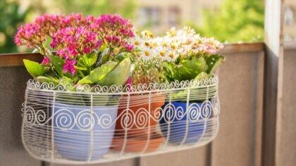 Ostrów Mazowiecka - Kwiaty balkonowe Zadbany balkon to nie tylko wizytówka nasz