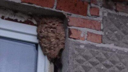 Ostrów Mazowiecka - Strażacy kolejny raz interweniowali w sprawie usuwania gniaz